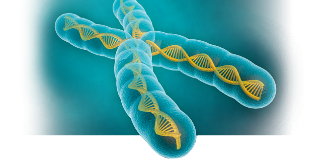 research papers on gene expression 2018-6-1  the common fund's genotype-tissue expression  over 650 papers were published  • novel statistical methods for human gene expression.