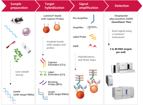 Workflow of QuantiGene® 2.0 Plex Assay from Affymetrix used in Booher et al.