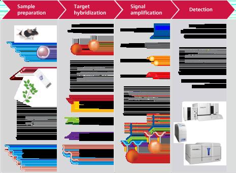 Workflow of QuantiGene® 2.0 Plex Assay from Affymetrix used in Booher et al.