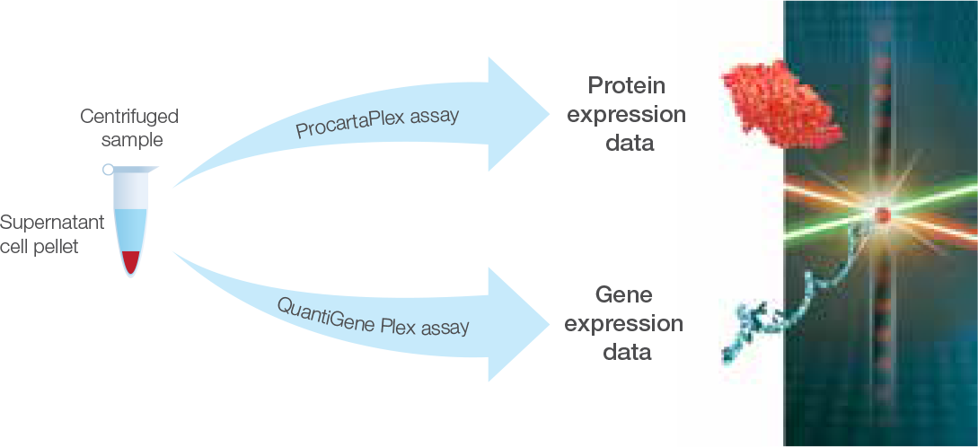 Single sample analysis of protein and gene expression