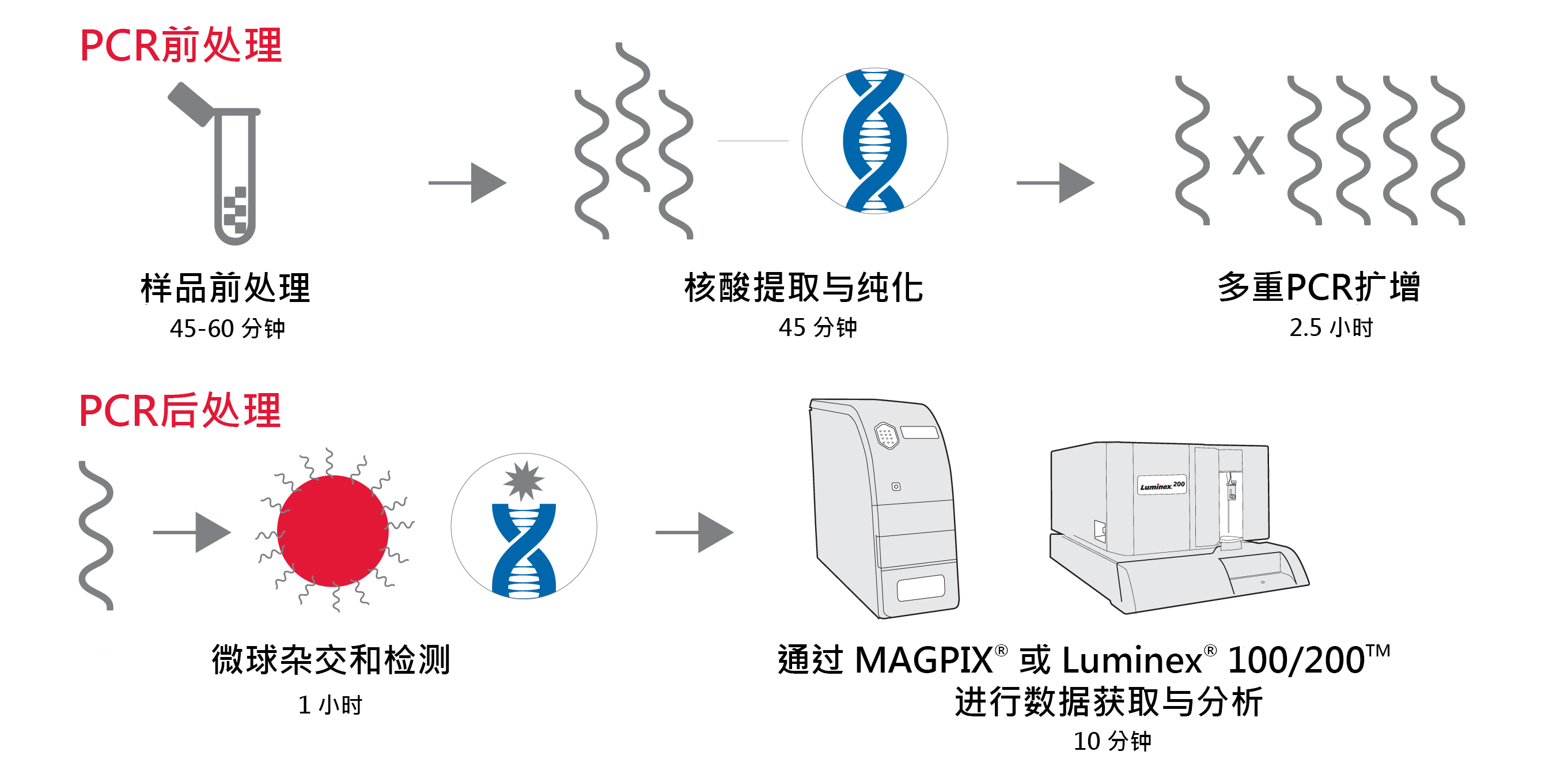 xTAG Gastrointestinal Pathogen Panel workflow